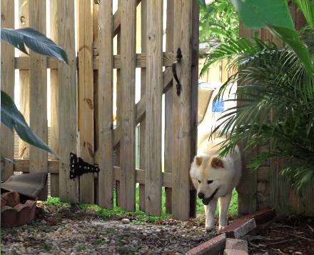 trackimo-gps-mascotas